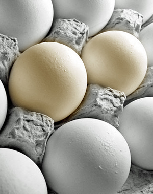Black and white of eggs in a carton.